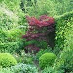 A l'avant plan Hosta en variétés, Buxus boule et érable du Japon pour sa belle couleur toute la saison, ici en mai