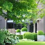 le terrasse vue du jardin avec buis boule en pots