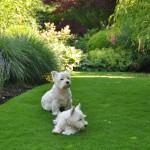 Une belle pelouse pour jouer