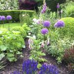 Fleurs d'ail, en blanc ou en mauve, très décoratif du tout début du printemps à juin inclus