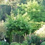 Mon jardin de curé, avec des roses et des pivoines pour faire des bouquets