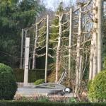 Tilleuls palissés dans un jardin en mars