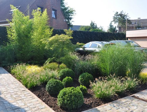 Jardin avant avec grand parking